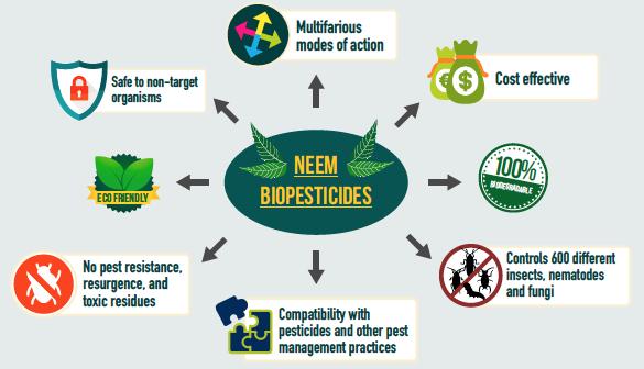 neem-for-bio-pesticides